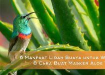 6 Manfaat Lidah Buaya untuk Wajah & Cara Buat Masker Aloe Vera