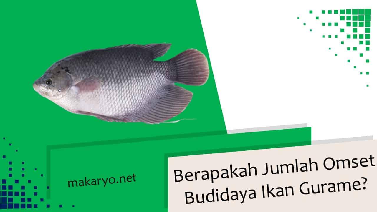 Berapakah Jumlah Omset Budidaya Ikan Gurame Tahun 2021?