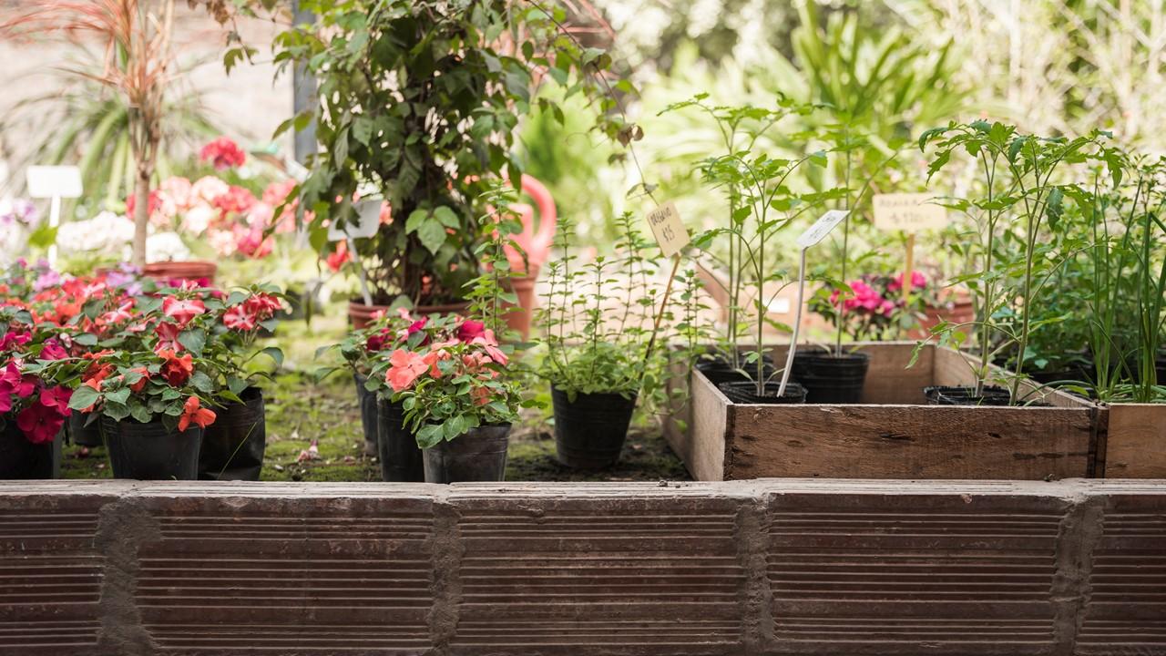 Risiko dan tantangan budidaya tanaman hias